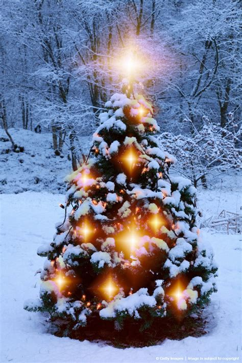 thoughts on decorating a tree 212 best trees and lights images on time merry
