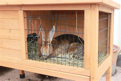Rabbit Lives In A Hutch many pet rabbits worse than battery rabbits
