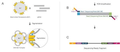 illumina whole genome sequencing nextera dna flex library prep kit for whole genome