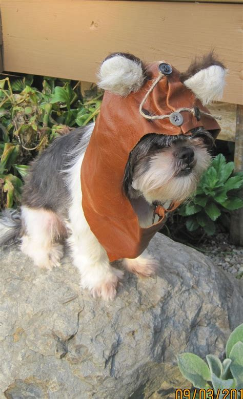 yorkie ewok costume 1000 images about costumes on wickets costumes