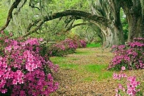 Majestic Garden majestic gardens