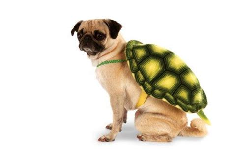 when can puppies go outside for the time costume ideas 32 easy costumes for your canine today
