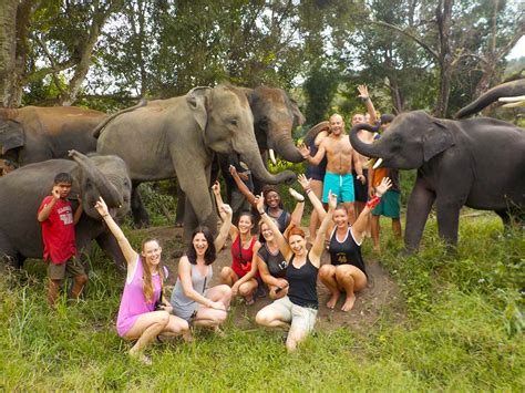 family friendly guide to chiang mai tieland to elephant family sanctuary chiang mai thailand brochures