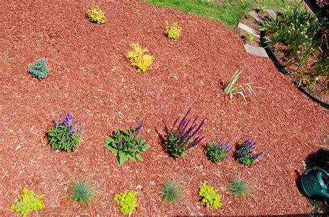 How To Plant A Flower Bed by Study Planting Flower Beds