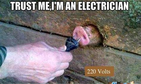 Electrician Memes - 50 funny pig pictures to make you laugh