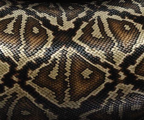 snake print snake print predator and prey snake print