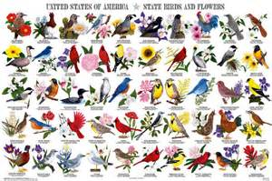 Salt New American Table State Birds And Flowers Poster