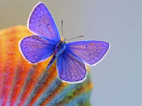 the butterfly butterfly the most beautiful insect the wondrous pics