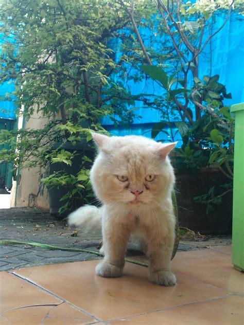 Kucing Bayi Lucunya Kucing Dan Bayi Bermain Bersama Kucing Lucu