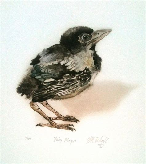 baby bird magpie limited edition fine art print signed