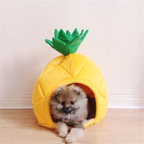 dogs and pineapple yml pineapple pet bed petagadget