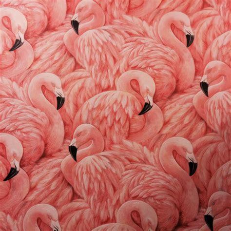flamingo wallpaper buy pink flamingo wallpaper wallpapersafari