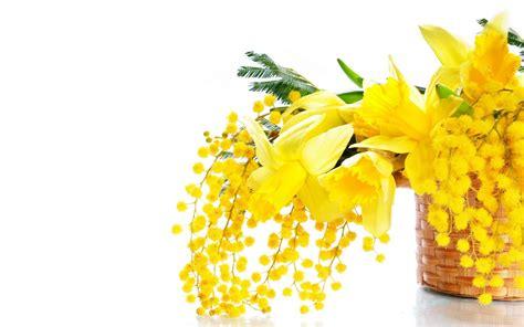 festa della donna fiore festa delle donne a villa orchidea villa orchidea
