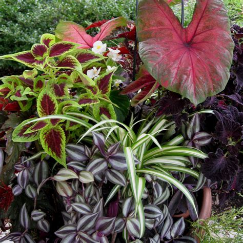 annual flowers for shade containers