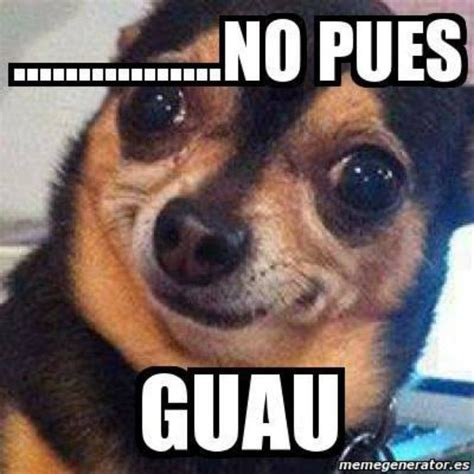 Chihuahua Meme - 23 best images about mexican humor on pinterest