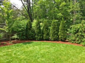 Trees To Plant In Backyard Artistic Landscapes Com Blog 187 Pruning