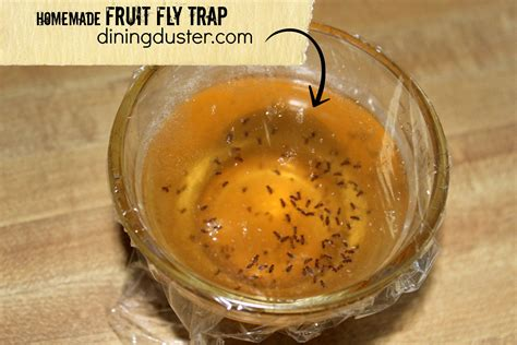 fruit fly trap get rid of pesky fruit flies fruit fly trap dining duster