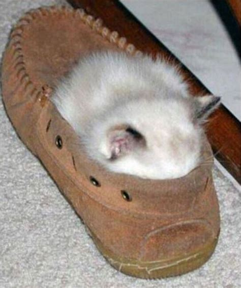 funny cat in shoes 40 most funniest sleeping animal pictures that will make