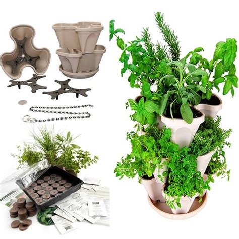 shop indoor herbal tea herb garden starter kit