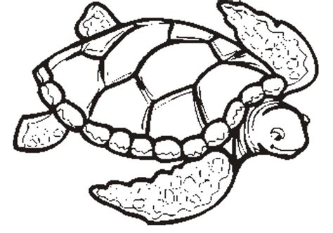Turtle Color Page Sea Turtle Coloring Pages To Download And Print For Free by Turtle Color Page