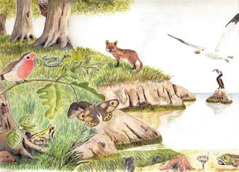 imagenes de ecosistemas naturales wikinatu 191 que es un ecosistema