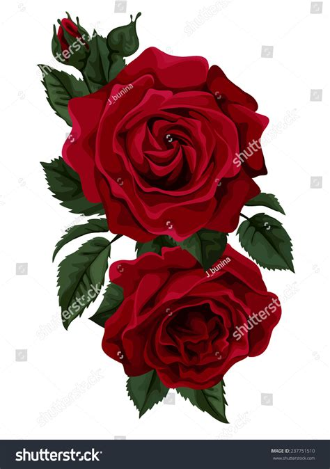roses on day beautiful bouquet of roses isolated on white for