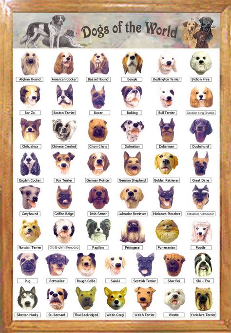 all breeds puppies list of every breed f f info 2017