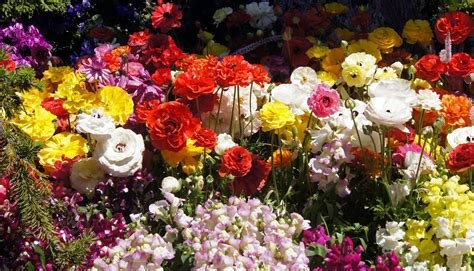 10 wow facts about flowers all about flowers our blog flora2000 com