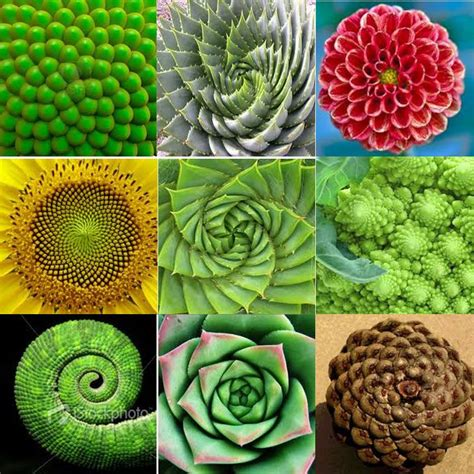 math pattern in nature using photoshop to explore fibonacci in nature adobe