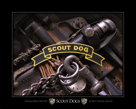 scout puppy scout dogs
