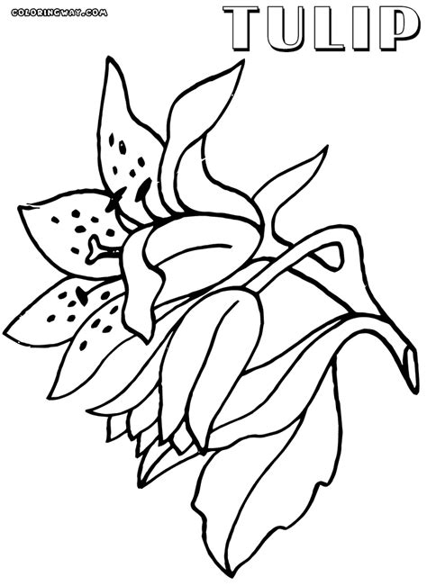 tulip coloring pages tulip coloring pages coloring pages to and print
