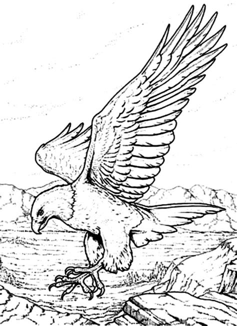 printable coloring pages bald eagle bald eagle coloring pages download and print for free