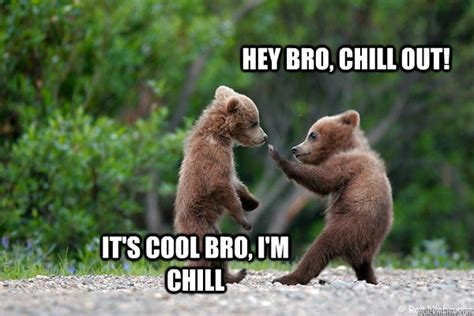 Chill Out Bro Meme - hey bro chill out it s cool bro i m chill chill out