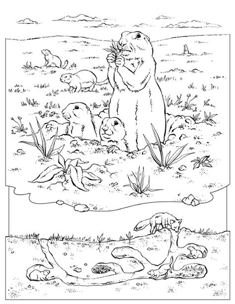 underground animals coloring page coloring book animals a to i coloring coloring pages