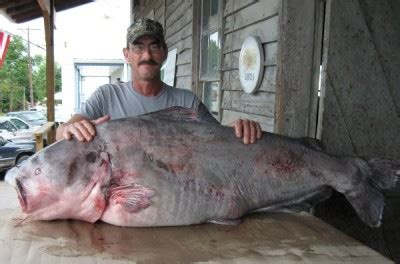 Missouri State Records Angler Shatters Missouri State Record For Blue Catfish