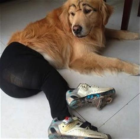 Pantyhose Meme - best of dogs wearing pantyhose meme 50 pics