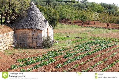 Italian Kitchen Garden by Trullo In Kitchen Garden Near Alberobello Italy Royalty