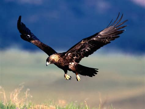 cool eagle wallpaper cool eagle wallpapers cool wallpapers
