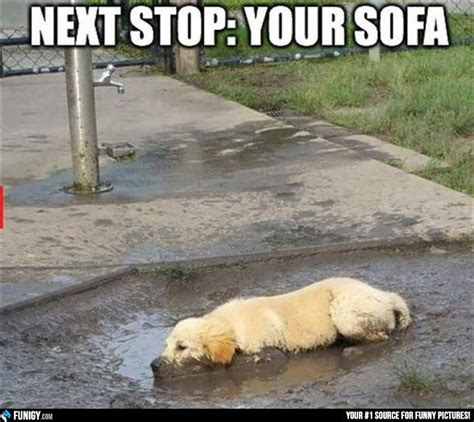 how to stop dog going on sofa how to stop dog going on sofa 28 images how to stop a