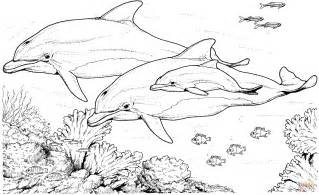 Bottlenose Dolphin Coloring Page 301 moved permanently