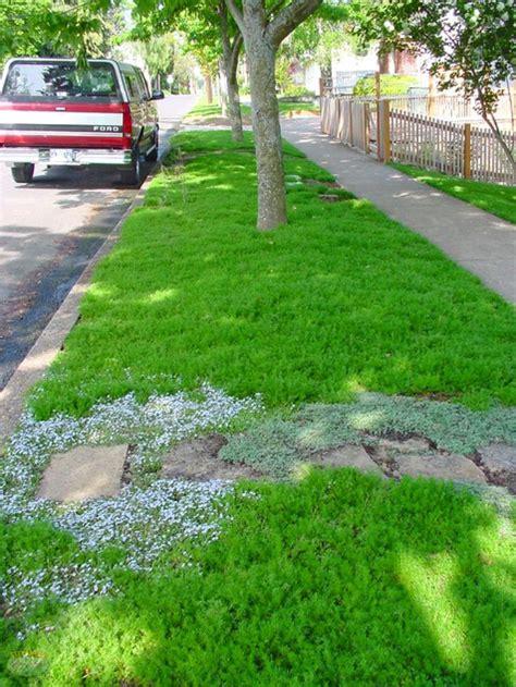 alternative layout for landscape 17 best ideas about lawn alternative on pinterest grass
