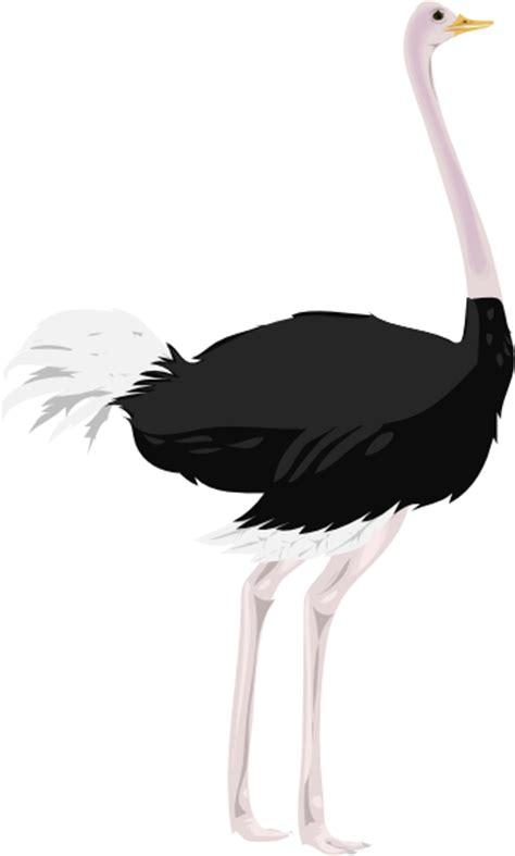 ostrich clipart ostrich clip at clker vector clip