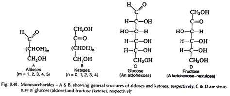 carbohydrates meaning carbohydrates meaning and classification biochemistry