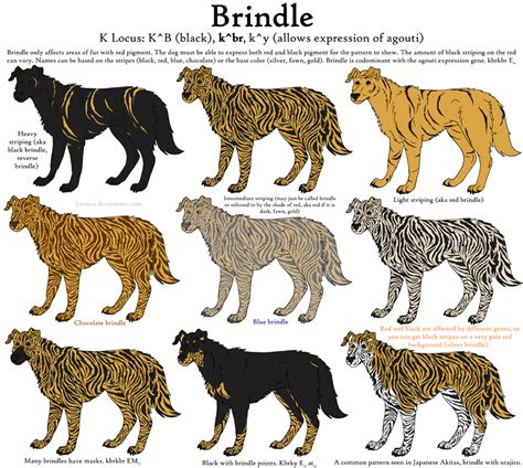 Dog Colors Guide  Brindle by Leonca on DeviantArt