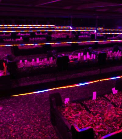 under bench led lighting led plant lighting icps