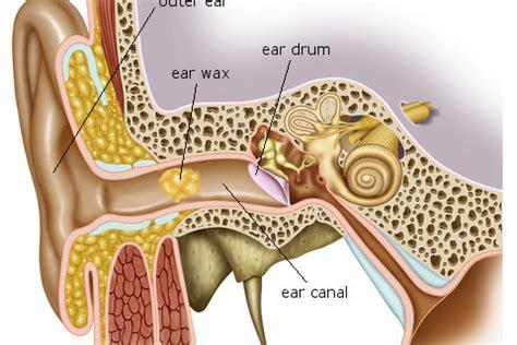 ear wax diagram blackburn clinic state of the ear wax micro suction