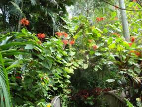 Tropical Garden Flowers Tropical Garden Wallpapers Pictures Of Tropical Plants