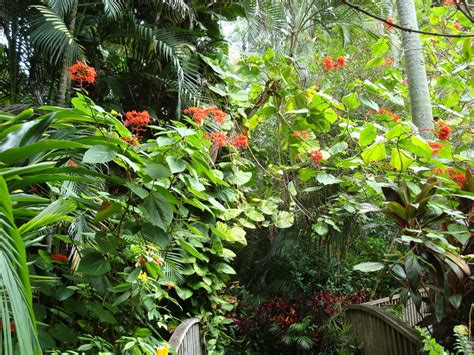 Tropical Garden Flowers Tropical Garden Flowers Tropical Flowers Wallpaper Plants For Tropical Gardens Beautiful