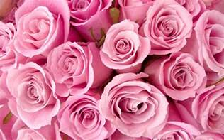 Birthday Gemstones And Flowers - pink rose wallpaper images amp pictures becuo