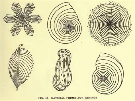 nature growth pattern 23 best natural patterns images on pinterest fractals